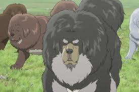 le-chien-du-tibet--le-roi